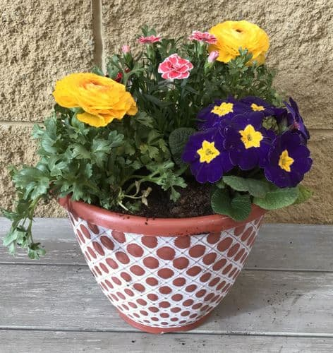 Filled Container - Terracotta Coloured Pot